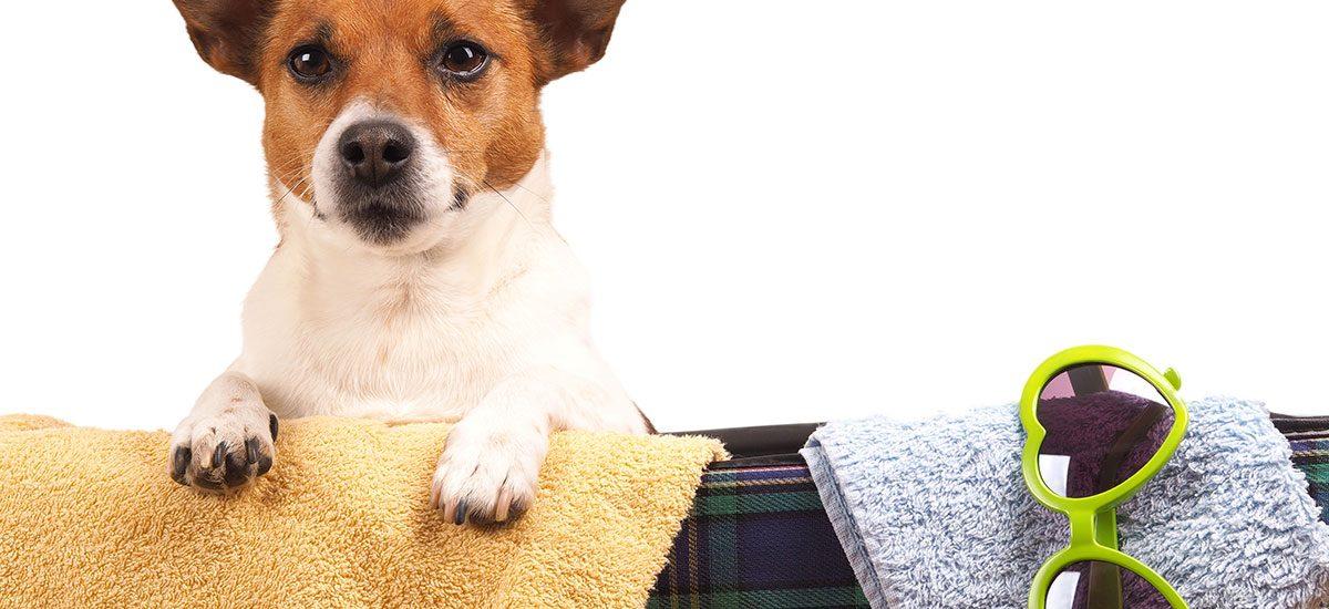Hund med på bornholm